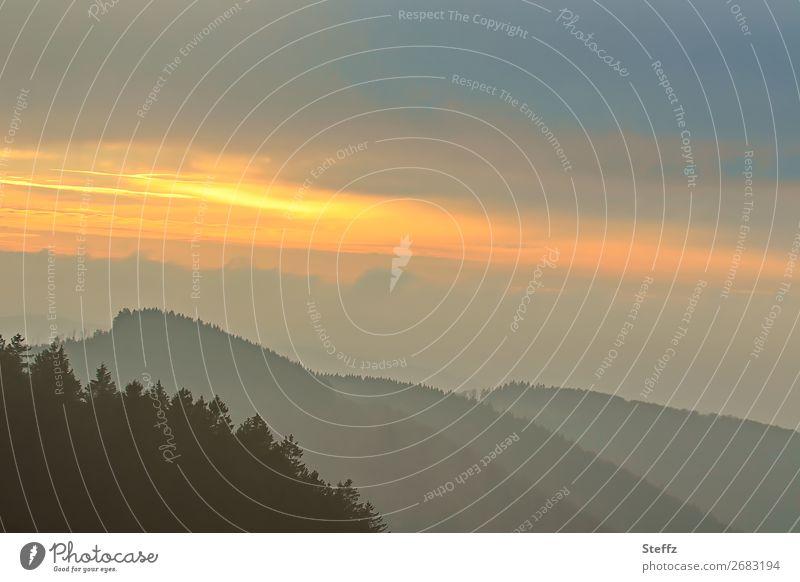 Am Vorabend Umwelt Natur Landschaft Himmel Wolken Sonnenaufgang Sonnenuntergang Baum Nadelbaum Wald Hügel Deutschland dunkel natürlich schön gelb grau orange