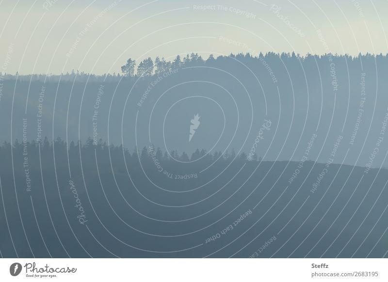Sentiment Umwelt Natur Landschaft Nebel Baum Nadelbaum Wald Hügel Waldrand Deutschland schön trist blau grau Stimmung ruhig Traurigkeit Lichtstimmung