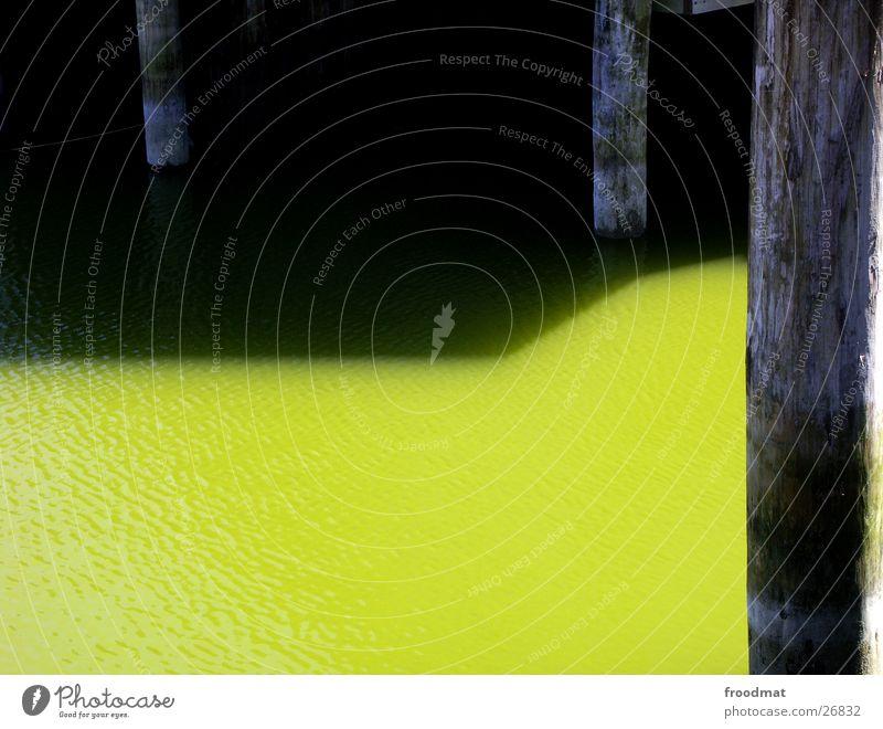 Wasserschattengewächse Wasser grün ruhig Holz verfallen Ostsee Geometrie graphisch