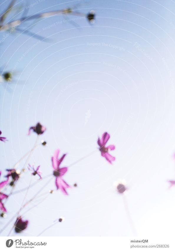Shine. Umwelt Natur Landschaft Pflanze ästhetisch Blume Blumenwiese Idylle friedlich Himmel Sommer Sonnenlicht violett rosa blau ruhig Einsamkeit schön Farbfoto
