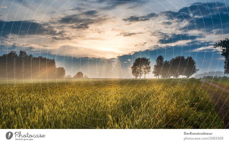 Nach dem Gewitter - Sonnenuntergangsstimmung auf dem Land Sommer wandern Landwirtschaft Forstwirtschaft Umwelt Natur Landschaft Wolken Horizont Sonnenaufgang