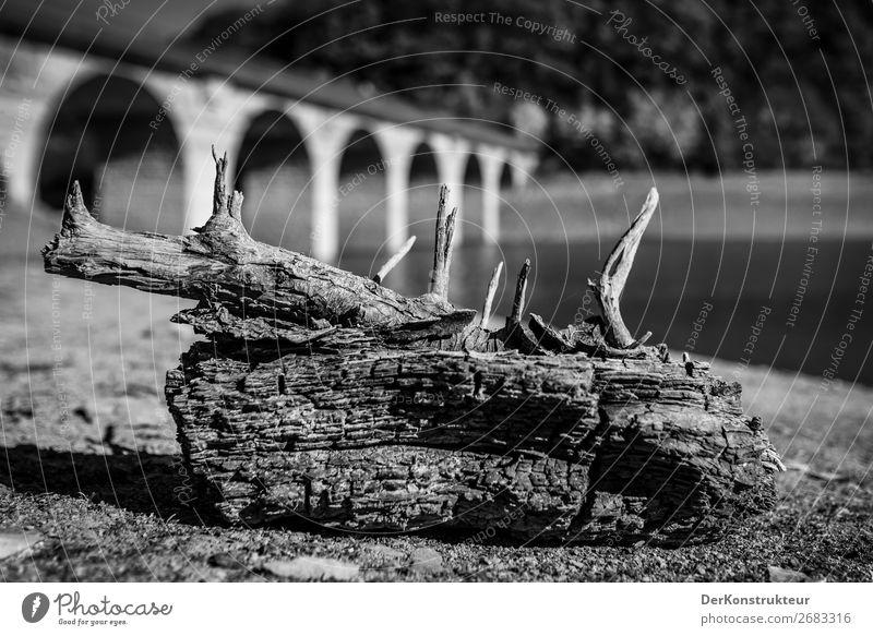 Totes Holz im See Umwelt Natur Landschaft Herbst Küste Seeufer Sehenswürdigkeit natürlich schwarz weiß Umweltschutz Tag Kontrast Schwache Tiefenschärfe