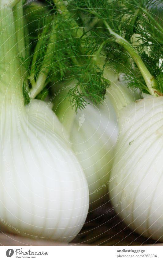 Marktleben I - Willkommen im Fenchelwald! grün weiß Erholung natürlich Gesundheit Lebensmittel frisch Idylle ästhetisch Ernährung Perspektive genießen rund