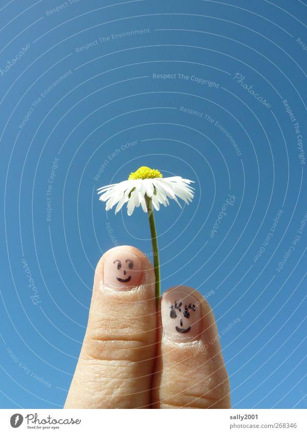 Natürlicher Sonnenschutz Mensch Paar Partner Finger 2 Wolkenloser Himmel Sonnenlicht Schönes Wetter Blume Gänseblümchen Sonnenschirm berühren Blühend Lächeln