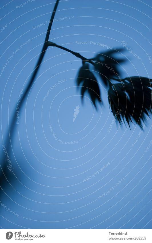 ich.will.mit.warmem.hintern.überwintern. blau grün Pflanze Blatt schwarz dunkel Gras geheimnisvoll türkis tief verstecken durcheinander Spirale Irritation