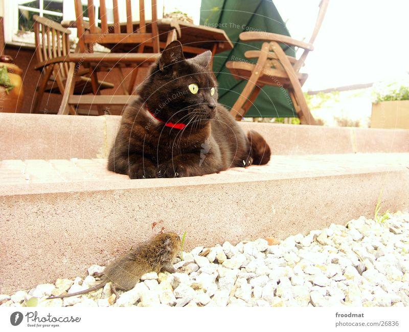 Killer Tod Katze Stuhl Blut Maus Hauskatze Kieselsteine Mörder