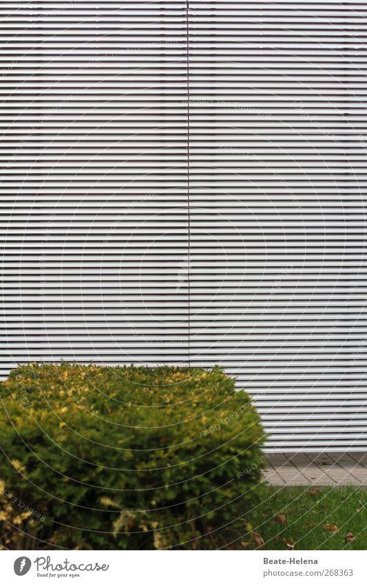 Ordnung ist das halbe Leben Haus Pflanze Sträucher Park Gebäude Architektur Fassade Häusliches Leben Stadt grau grün Perspektive Lamellem Grünstreifen
