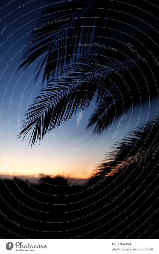 #AS# Silent Garden Umwelt ästhetisch Palme Palmenwedel Palmentapete Palmenstrand Palmendach Palmenhaus Ferien & Urlaub & Reisen Urlaubsfoto Urlaubsstimmung