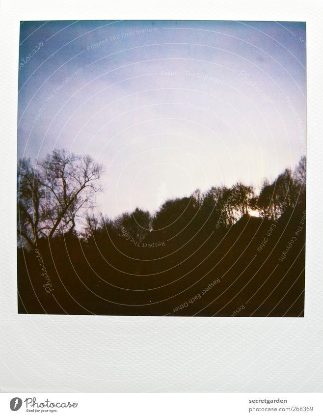 walpurgisnacht Natur Pflanze Wolkenloser Himmel Sonnenaufgang Sonnenuntergang Winter Baum Sträucher Park Wald Hügel Berge u. Gebirge blau schwarz weiß ruhig