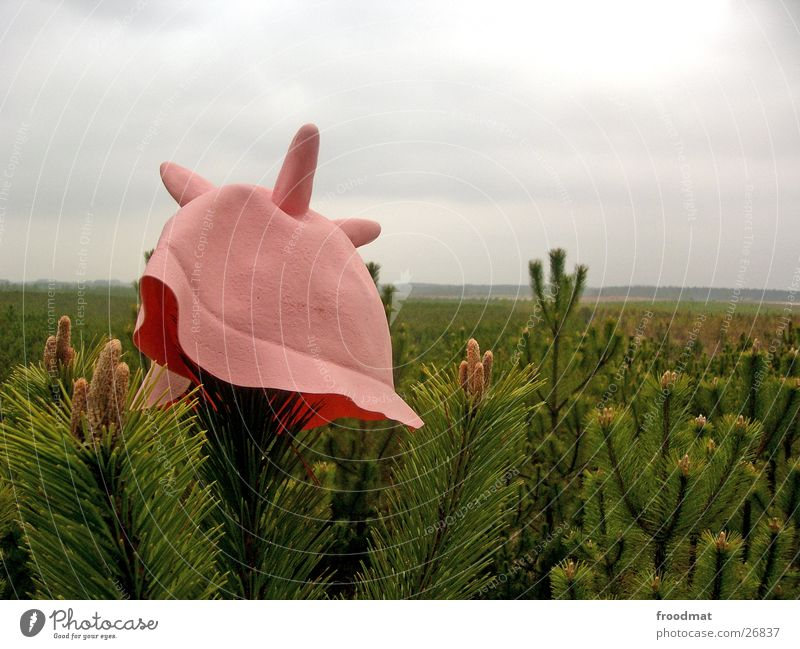 Kuhhut im Wald rosa Hut obskur Mütze Gummi Kopfbedeckung Nadelwald Euter