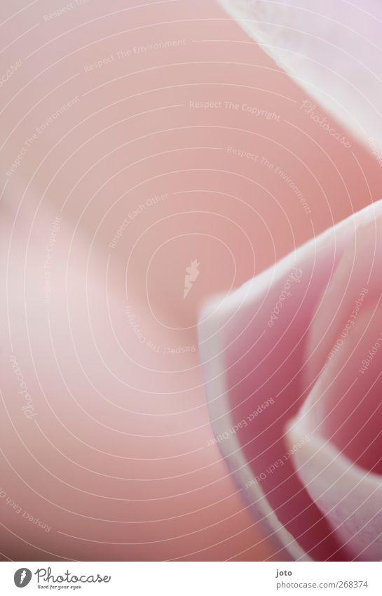 take a smell Pflanze Sommer Blume Erotik ruhig Wärme Blüte Frühling feminin Wachstum elegant Geburtstag ästhetisch Energie einzigartig Sauberkeit
