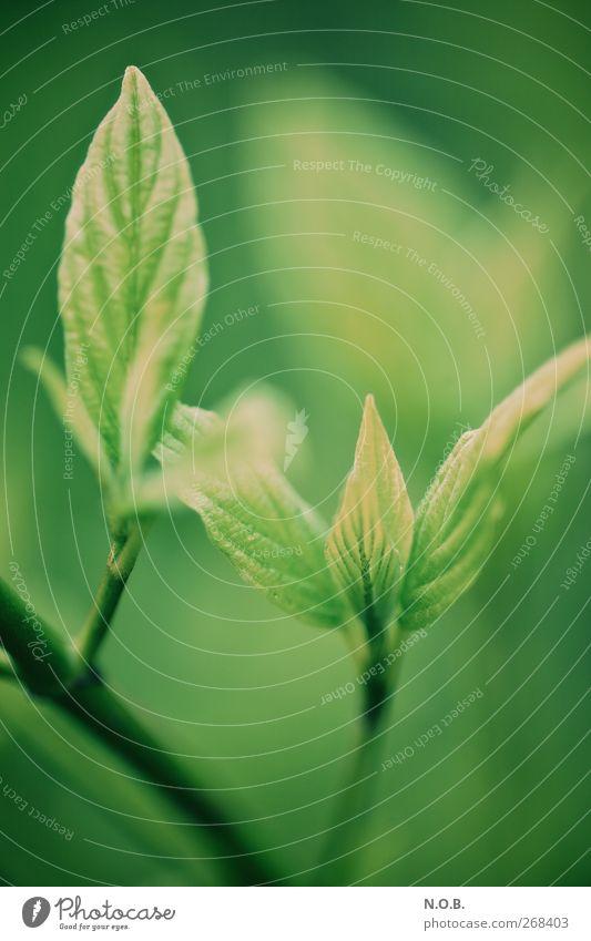 Zusammen Wachsen Umwelt Natur Pflanze Frühling Schönes Wetter Sträucher Blatt Garten Park alt Wachstum frisch grün Frühlingsgefühle Kraft Partnerschaft