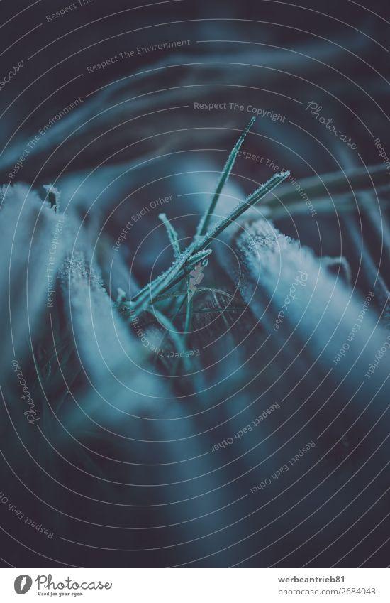 Blurry gefrorenes Gras im Winter Unschärfe matt - Bildtechnik grün Temperatur kalt Natur Menschenleer Nahaufnahme Schnee Eis Frost schön Pflanze Makroaufnahme