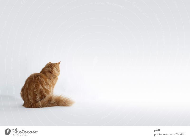 wartende Katze rot Freude Tier ruhig Erholung klein Tierjunges braun sitzen Rücken niedlich weich Idylle Fell