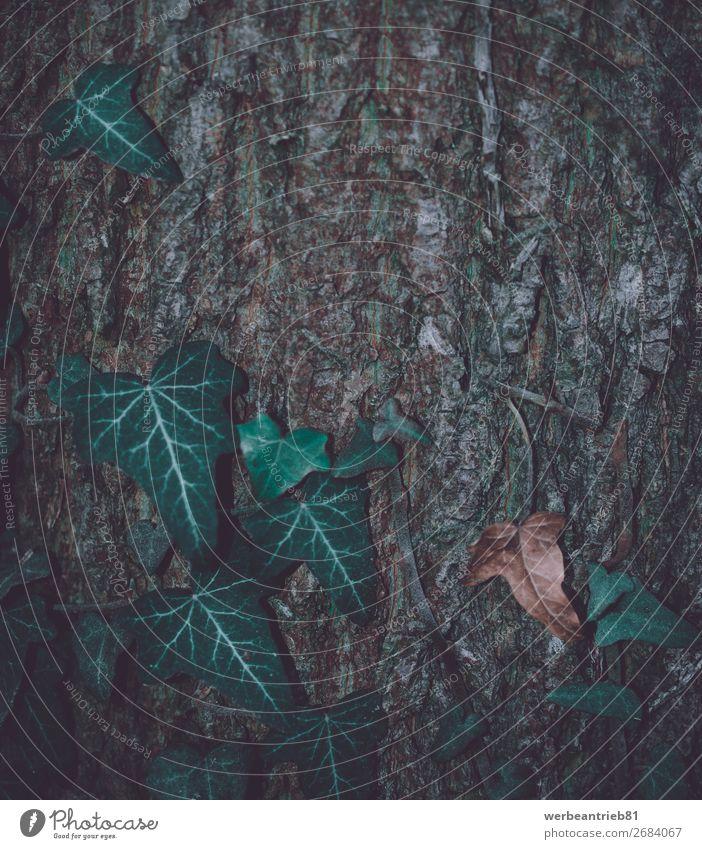 Matte Blätter vor einem Hintergrund aus Holzbaumstamm matt - Bildtechnik Nahaufnahme gefroren Winter Blatt Wachstum Dezember zerbrechlich Hintergrundbild Baum