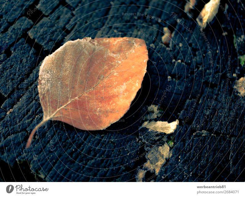 Orangenblatt auf einem Baumstamm Hintergrund matt - Bildtechnik Nahaufnahme gefroren Winter Blatt Wachstum Dezember zerbrechlich Hintergründe Makroaufnahme