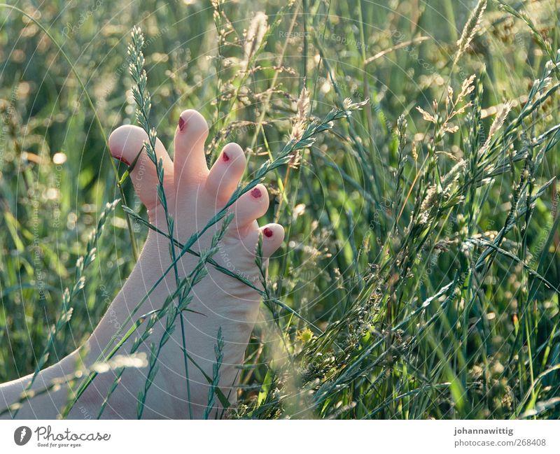 fußspitzengefühl. Mensch Frau Natur Jugendliche grün rot Sommer Mädchen Freude Erwachsene Wiese Gefühle Gras Freiheit Garten Fuß