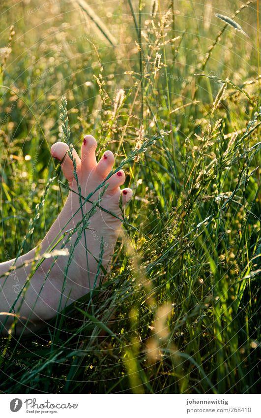 fußspitzengefühl zwei. Mensch Natur Jugendliche grün rot Sommer Mädchen Freude Erwachsene Wiese Spielen Gefühle Junge Frau Fuß Feld sitzen