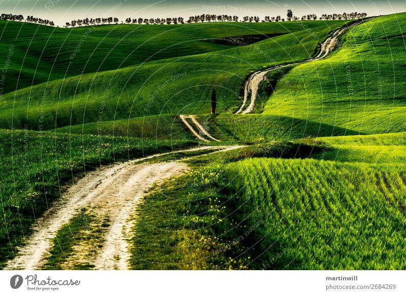 Weg zum Horizont der Toskana Ferien & Urlaub & Reisen Tourismus Ausflug wandern Joggen Landschaft Wiese Feld Hügel Wege & Pfade San Quirico d'Orcia Val d'Orcia