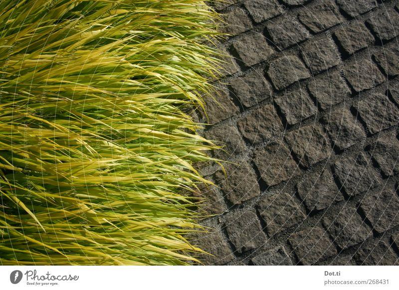 randbegrünt Natur Pflanze Gras Wege & Pfade Stein Gegenteil Pflastersteine Grünpflanze üppig (Wuchs)