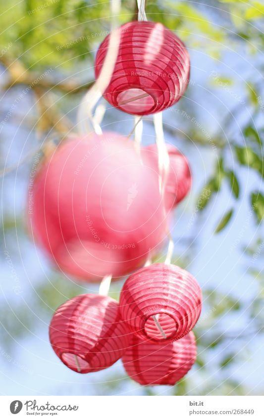 und es bewegt sich doch blau Himmel (Jenseits) grün Sommer Blatt Freude Frühling Feste & Feiern Garten Party rosa Häusliches Leben Dekoration & Verzierung