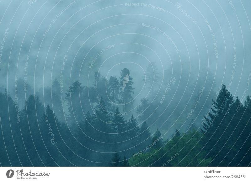 Im schwarzen Wald Umwelt Natur Landschaft Pflanze Klima schlechtes Wetter Nebel Regen Baum dunkel Nebelbank Nebelschleier Nebelwald Nebelstimmung Tanne Laubbaum
