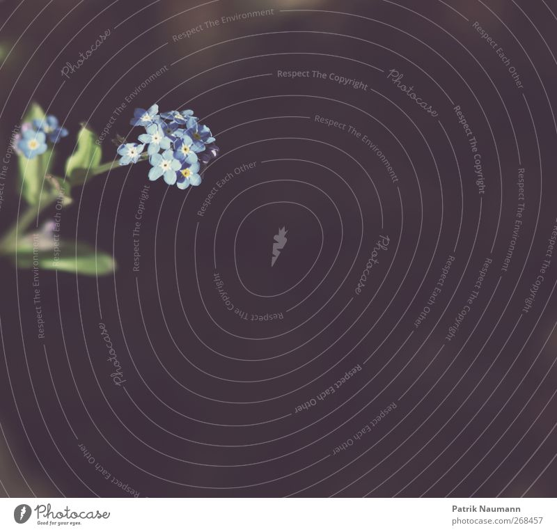 Licht und Schatten Natur blau grün Pflanze Sommer Blume Tier schwarz Umwelt Frühling Garten braun Erde Ordnung verrückt ästhetisch