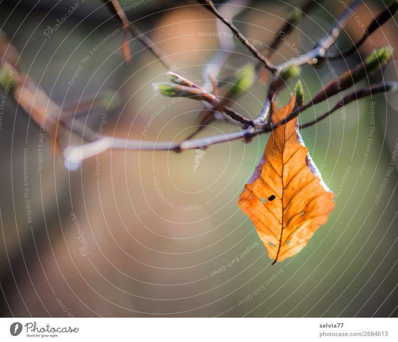 Kreislauf der Natur Umwelt Pflanze Frühling Baum Sträucher Blatt Zweige u. Äste Blattknospe Park Wald leuchten Wachstum alt frisch natürlich neu Beginn Hoffnung
