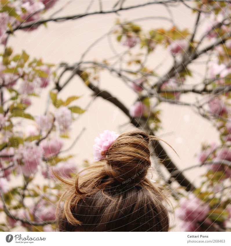 rosa Reich Haare & Frisuren feminin Kopf 1 Mensch Pflanze Baum Blatt Blüte Kirschblüten Kirschbaum Accessoire Haarschmuck brünett Zopf Dutt frei schön