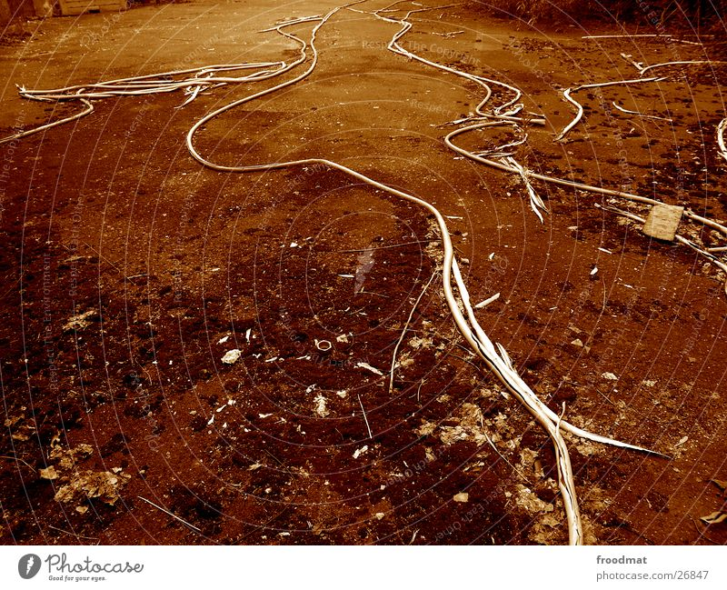 Erdwürmer ruhig dreckig Erde Kabel Bodenbelag obskur Schraube Gefäße Schwung