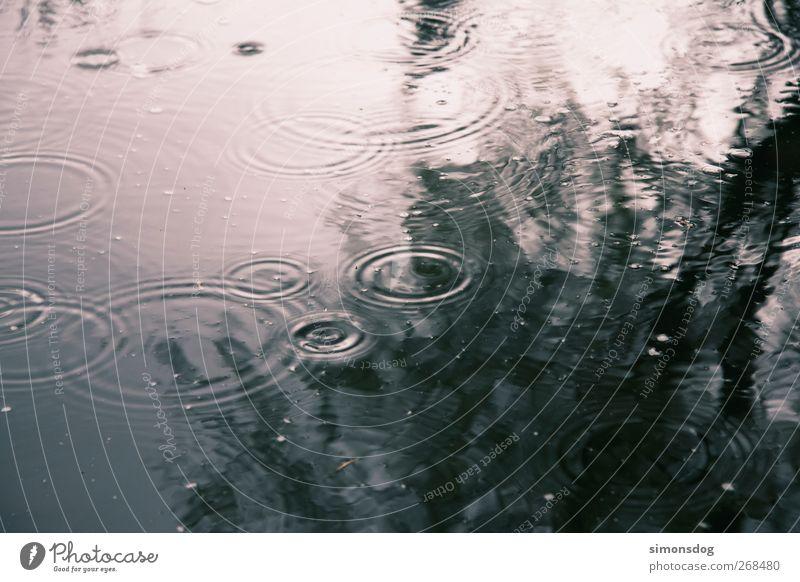 regenkreise Natur Wasser Baum Erholung Umwelt Bewegung See Regen Wetter Wellen Zufriedenheit Kraft nass Wassertropfen Kraft Urelemente