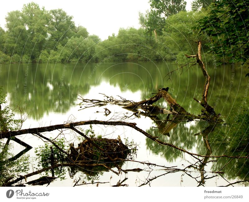 Wasser spiegelt schön Reflexion & Spiegelung Gras Baum Stimmung Hochwasser Reflektion Ast Wurzel