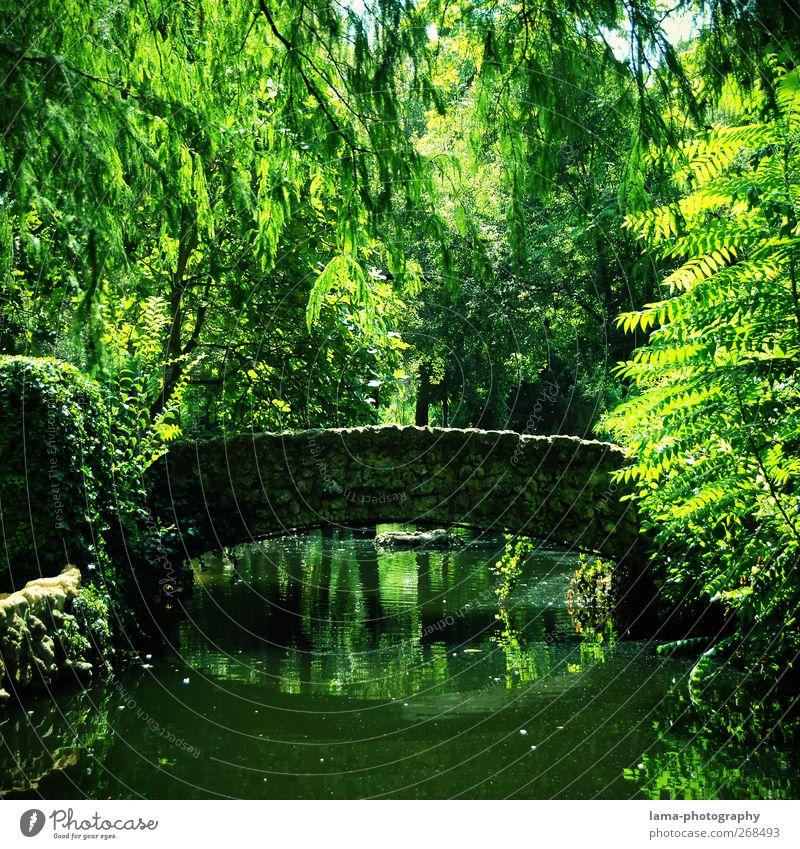 El puente idílico [XLIII] Umwelt Natur Pflanze Wasser Baum Farn Blatt Weide Park Teich See Bach Sevilla Maria-Luisa Park Andalusien Spanien Brücke natürlich