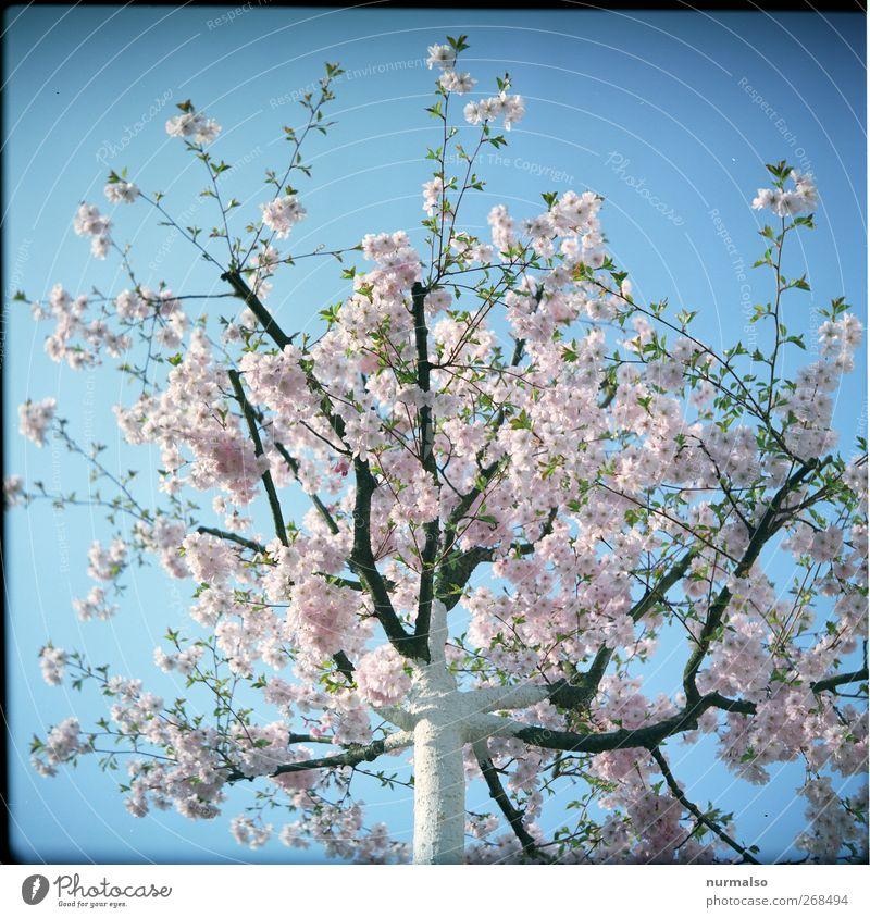 Baumblüte Himmel Natur schön Baum Pflanze Tier feminin Frühling Glück Garten Blüte träumen Park Stimmung rosa Freizeit & Hobby