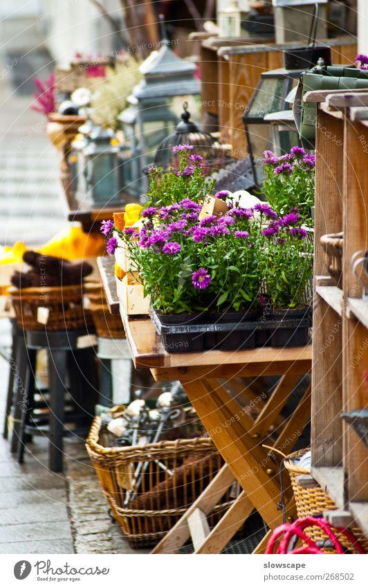Laden Geschäft Auslage Dekoration, Blumen, Antik & Trödel alt Blume Erholung grau Garten Lampe braun Zufriedenheit frisch kaufen Dekoration & Verzierung Kreativität violett Möbel Wohlgefühl Kleinstadt