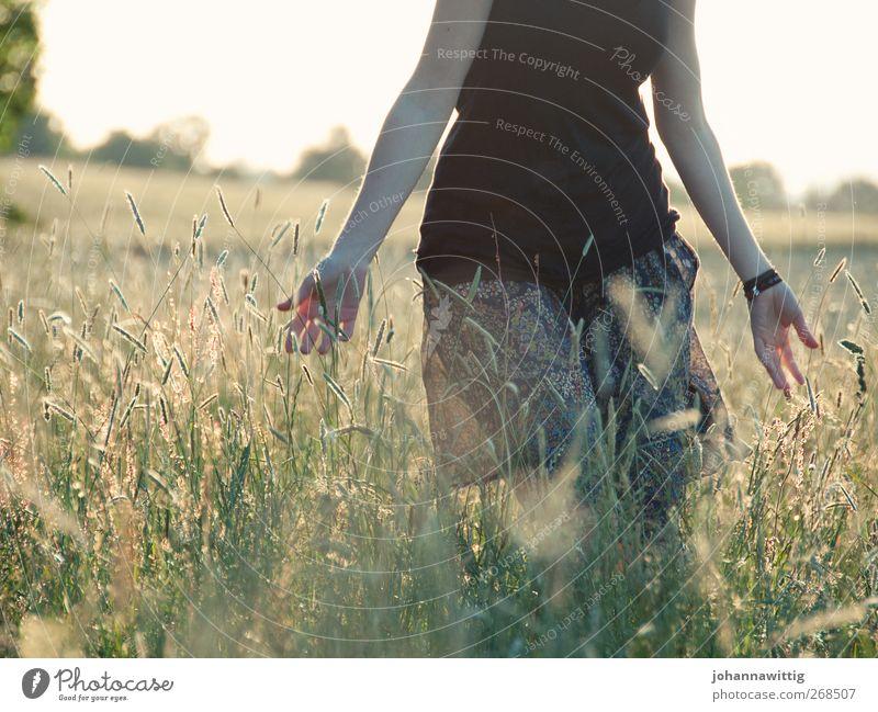 fingerspitzengefühl. Freiheit feminin Junge Frau Jugendliche 1 Mensch 18-30 Jahre Erwachsene Sonnenaufgang Sonnenuntergang Sommer Pflanze Gras Sträucher Feld