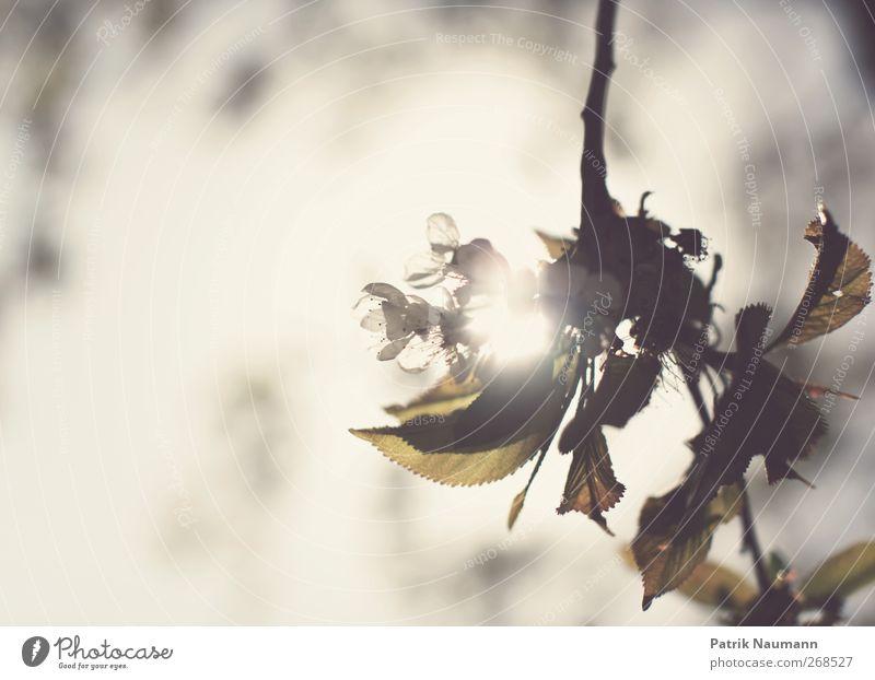 summer sunshine Natur Sommer Umwelt Blüte Gefühle Frühling Garten Park leuchten Blühend Idee Vergänglichkeit Schönes Wetter Hoffnung Glaube Duft