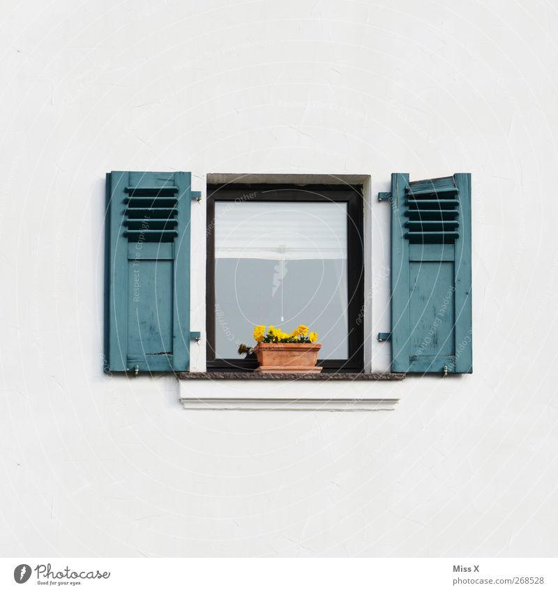 mit Deko Blume Topfpflanze Mauer Wand Fenster klein Fensterladen Fensterbrett Blumentopf Stiefmütterchen Dekoration & Verzierung Farbfoto Außenaufnahme
