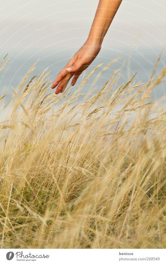 betouched Mensch Frau Natur Hand Sommer Einsamkeit Erholung Umwelt Wiese Herbst Freiheit See Zufriedenheit Arme natürlich Finger