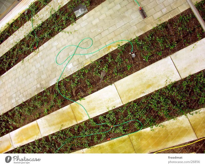 Indoor-Garten Garten verrückt diagonal Schlauch graphisch gestreift sehr wenige Potsdam Potsdam-Babelsberg