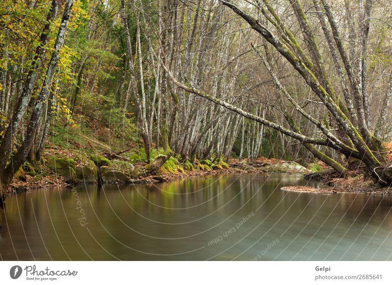 Herbstlandschaft mit einem von Bäumen umgebenen Fluss schön Natur Landschaft Himmel Wolken Baum Moos Blatt Park Wald Teich See Bach hell natürlich wild blau