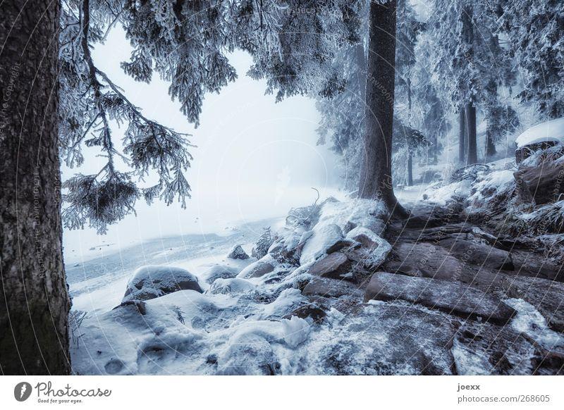 Licht und Schatten Winter Schnee Natur schlechtes Wetter Nebel Eis Frost Seeufer dunkel hell kalt blau schwarz weiß ruhig Idylle Klima Mummelsee fantastisch