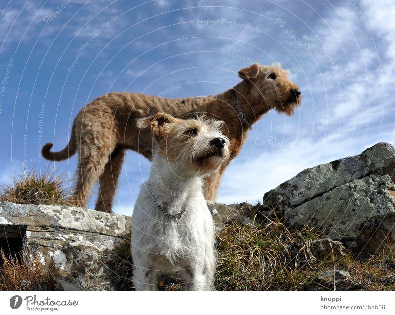Instinct Hund Himmel Natur blau weiß Sommer Tier Tierjunges Leben Gras grau Glück oben Felsen braun Zusammensein