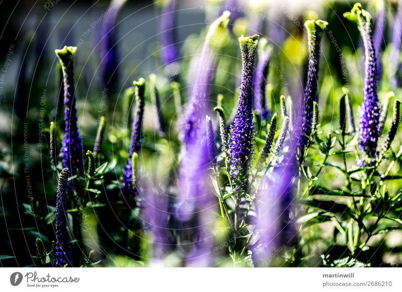 Unbekannte Schönheit / Orchidee exotisch Sommer wandern Natur Pflanze Blume schön Botanischer Garten Botanik Farbfoto Nahaufnahme Schwache Tiefenschärfe