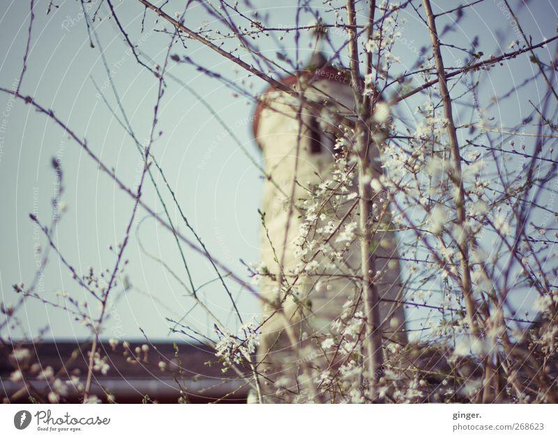 Rapunzel trifft Dornröschen Umwelt Natur Wolkenloser Himmel Sonnenlicht Frühling Schönes Wetter Baum Sträucher Blüte Garten Menschenleer Burg oder Schloss Turm