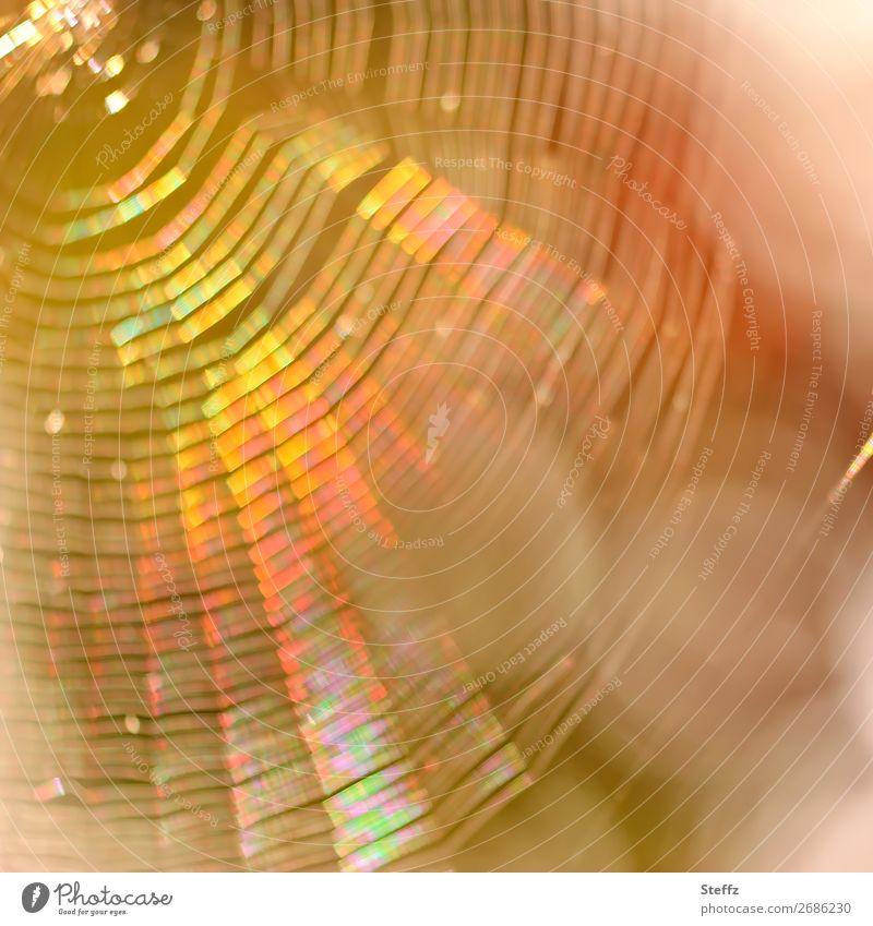Traumfänger Natur fangen glänzend rund schön mehrfarbig gelb orange Lichtstimmung Netzwerk träumen Spinnennetz netzartig traumhaft Lichtspiel Lichtschein