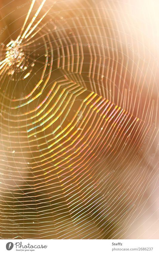 Dreamcatcher Natur Netz Netzwerk fangen glänzend rund schön mehrfarbig gelb orange Lichtstimmung träumen Spinnennetz Traumfänger netzartig Falle traumhaft