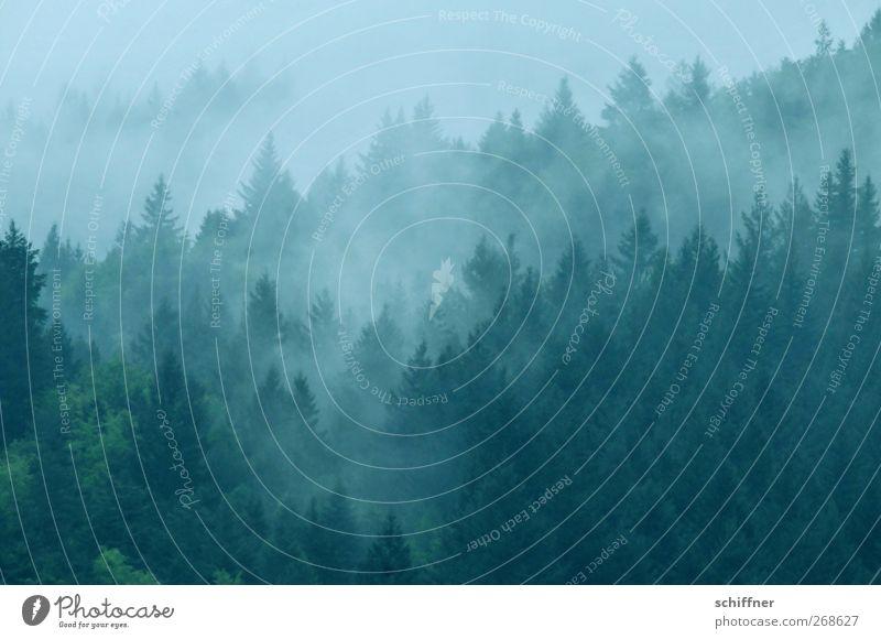 Im schwarzen Wald II Umwelt Natur Landschaft Pflanze Wolken Klima schlechtes Wetter Nebel Baum dunkel Nebelschleier Nebelwald Nebelstimmung Nebeldecke Nebelbank