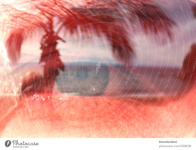 """""""Seeblick"""" Jugendliche schön Baum ruhig Gesicht Erwachsene Erholung Auge Umwelt Landschaft See Insel 18-30 Jahre beobachten Sonnenbrille weinen"""
