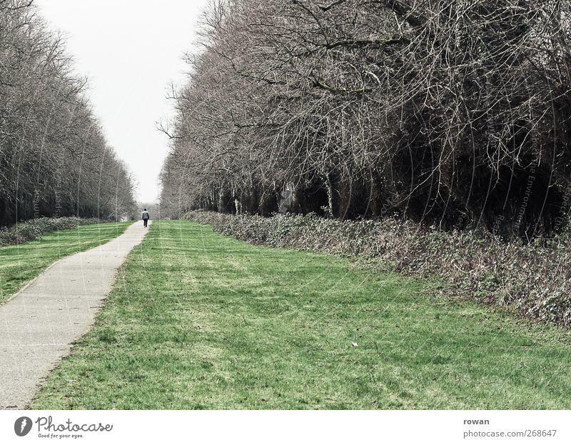 im fluchtpunkt Mensch Baum Einsamkeit Wald Straße dunkel Wiese Wege & Pfade grau Park gehen Perspektive Sträucher bedrohlich Spaziergang Ziel
